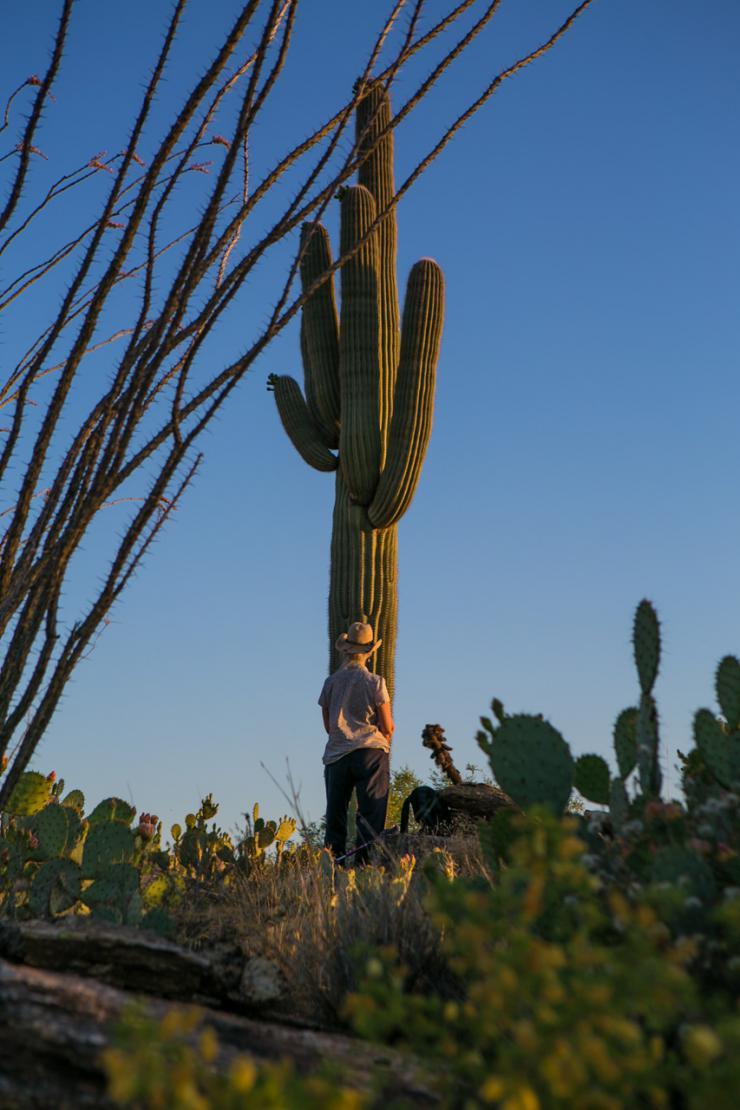 man facing a cactus