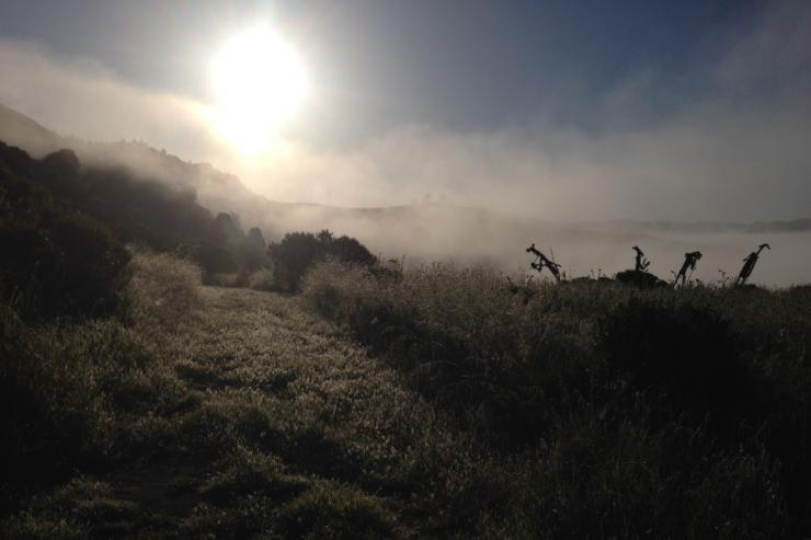 a foggy landscape